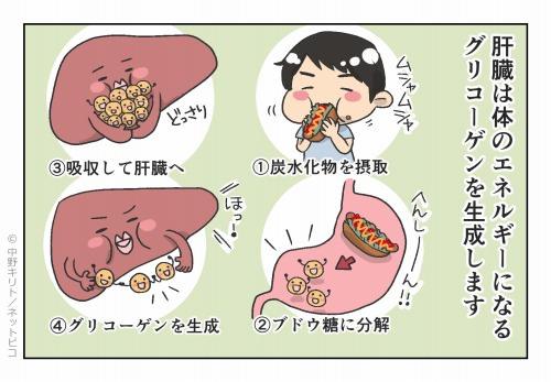 肝臓は体のエネルギーになるグリコーゲンを生成します