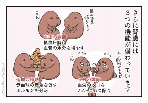 さらに臓器には3つの機能が備わっています