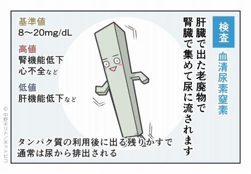 検査 血清尿素窒素
