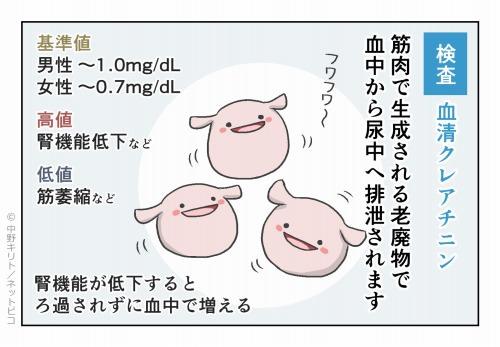 検査 血清クレアチニン