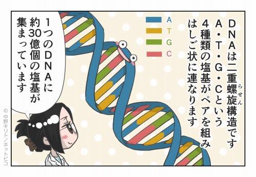 DNAは二重螺旋構造です
